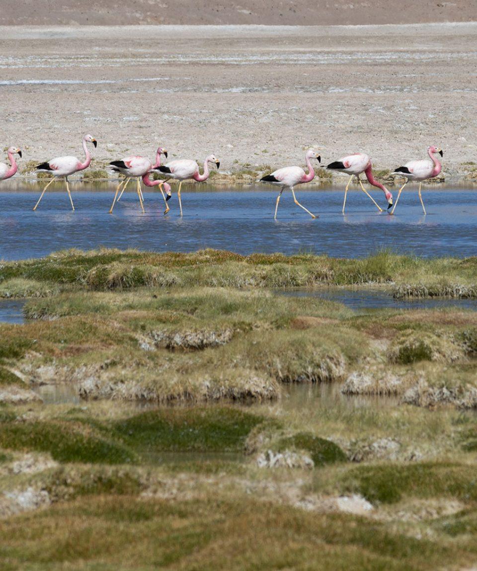 CapricornioExpediciones.com-San-Pedro-de-Atacama-Piedras-Rojas_1080x1080_8014