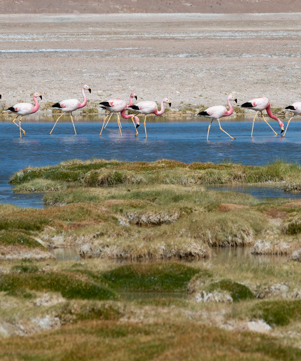 capricornioexpediciones.com-tour-lagunas-altiplanicas-y-piedras-rojas-2
